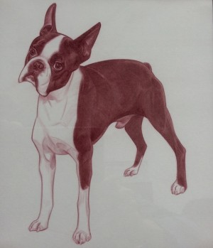 Boston Terrier One by Leonardo Villaseñor