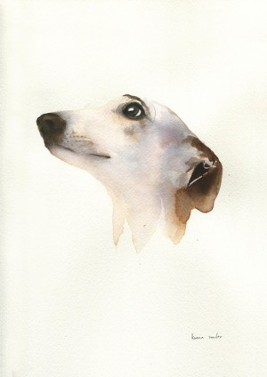 Greyhound Study 2 by Kareena Zerefos