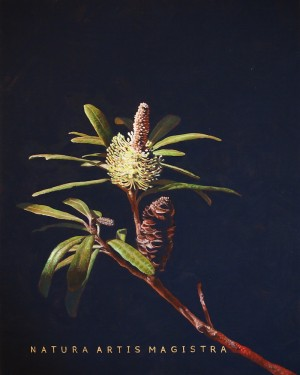 Nature Is The Teacher Of Art Banksia by Chelsea Gustafsson