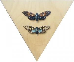 Cicada 2: Ambra + Gaeana by Alex Louisa
