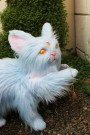 Sylph Oracle Kitten by Lee's Menagerie 2