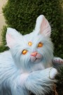 Sylph Oracle Kitten by Lee's Menagerie 3