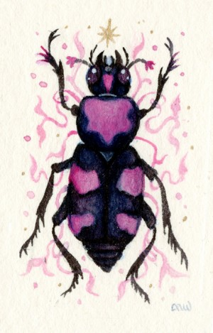 American Burying Beetle by Nana Williams