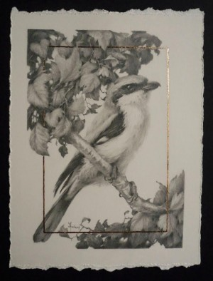 Loggerhead Shrike And Hawthorn 1 by Vanessa Foley