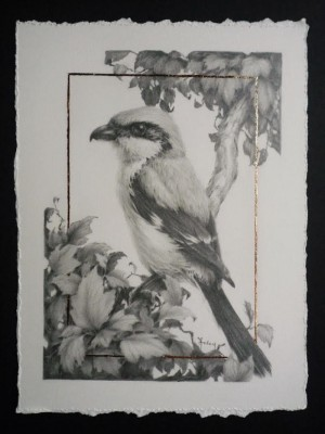 Loggerhead Shrike And Hawthorn 2 by Vanessa Foley