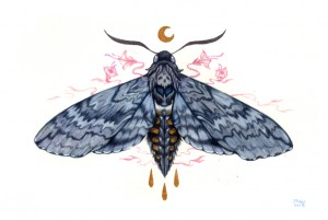 Blackburn's Sphinx Moth by Nana Williams
