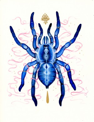 Gooty Tarantula by Nana Williams