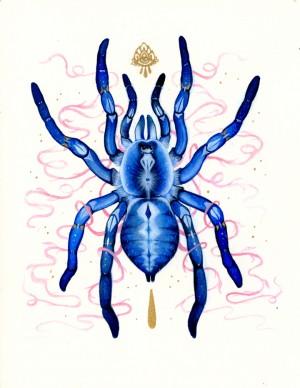 Gooty Tarantula by Nana Williams